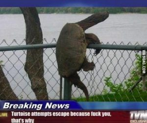 turtle, funny, and escape image