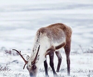 animal, snow, and deer image