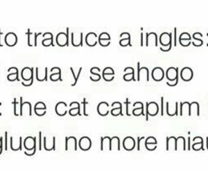 cat, gato, and frases image