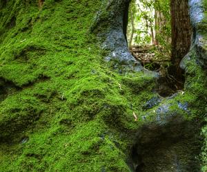 cool, moss, and stump image