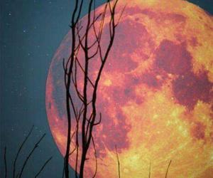 księżyc niebo drzewo image