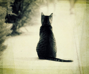 cat, kitty, and grey tabby image