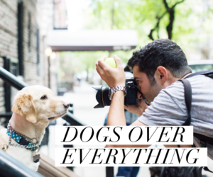 dogs, photography, and video image
