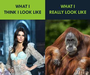 funny, Victoria's Secret, and kendall jenner image