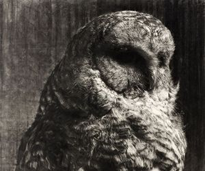 black and white, indie, and owl image