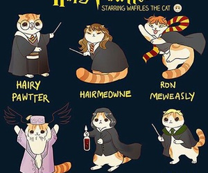 funny, harry potter, and cat version image
