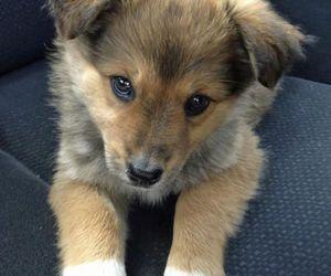 animal, puppy love, and animals image