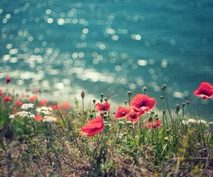 lake, poppy, and pretty image
