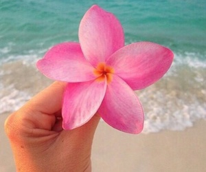 flowers, pink, and beach image