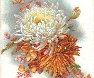 1900s, bloom, and chrysanthemum image