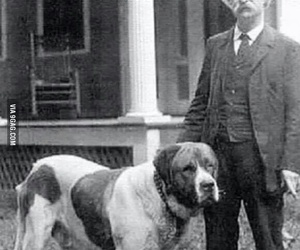 dog, quote, and mark twain image