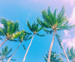 beach, flower crown, and palm trees image