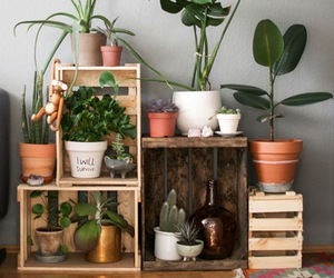 plants, decor, and home image