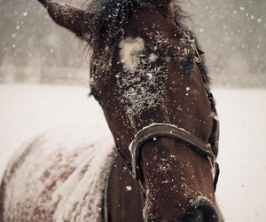 equine, horses, and snow image