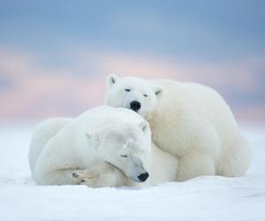 Polar Bear and animals image