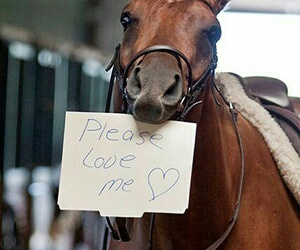 paarden and love image