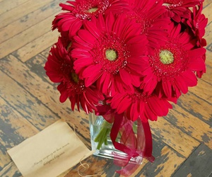 flowers, gerbera, and love image