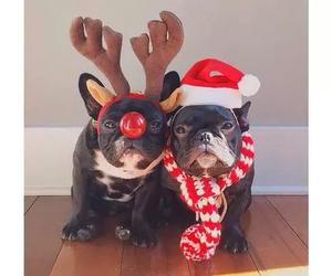 christmas, french bulldog, and jul image
