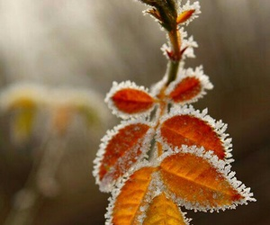 leaves, winter, and nature image