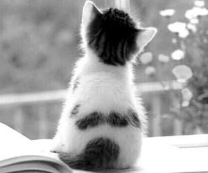 black and withe, cat, and happy image