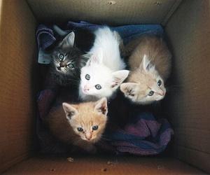 black, cute, and box image