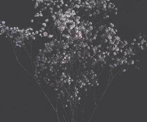 flowers, aesthetic, and baby's breath image