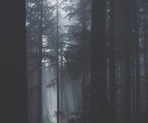 fog, forest, and light image