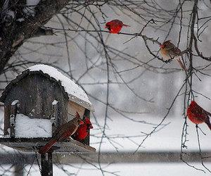 winter, bird, and snow image