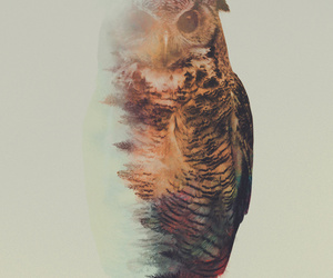 owl, animal, and art image