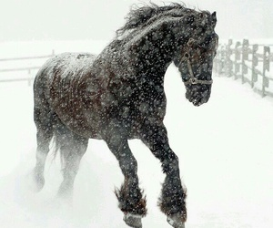 beauty, winter, and horse image