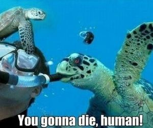 funny, lol, and turtle image