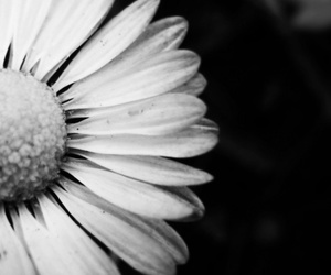 black and white, flowers, and home decor image