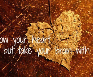 autumn, follow, and heart image