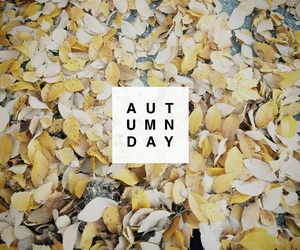 autumn, leaf, and leaves image