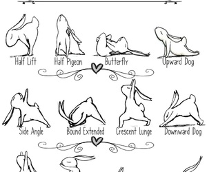 afternoon, bunny, and fitness image