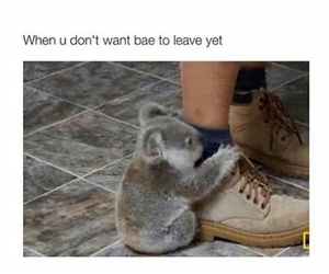 bae, love, and Koala image