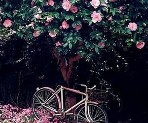 beautiful, pink, and bike image