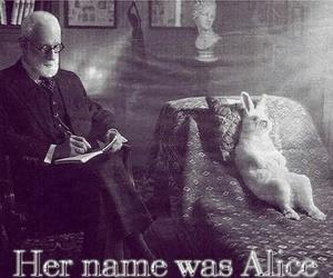 alice, rabbit, and wonderland image