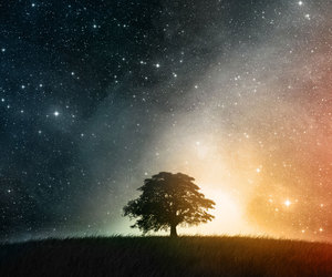 tree, stars, and sky image