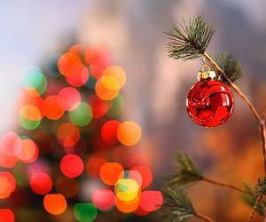 christmas, lights, and tree image