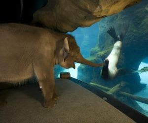 elephant, seal, and animal image