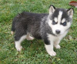 boy, dog, and husky image