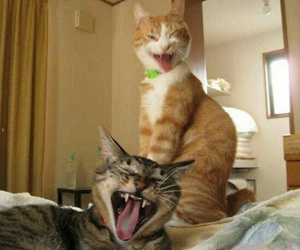 friday, cat, and funny image