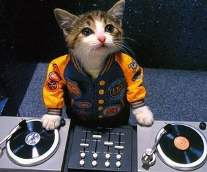 cat, dj, and music image