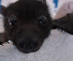 bat, cute, and adorable image