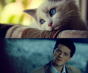 cat, castiel, and kitten image