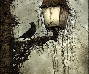 dark, crow, and black and white image