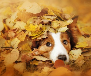 animals, autumn, and dog image