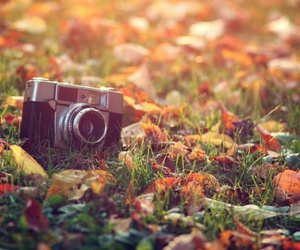 camera, autumn, and leaves image