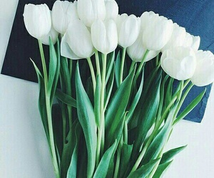 tulips and white image